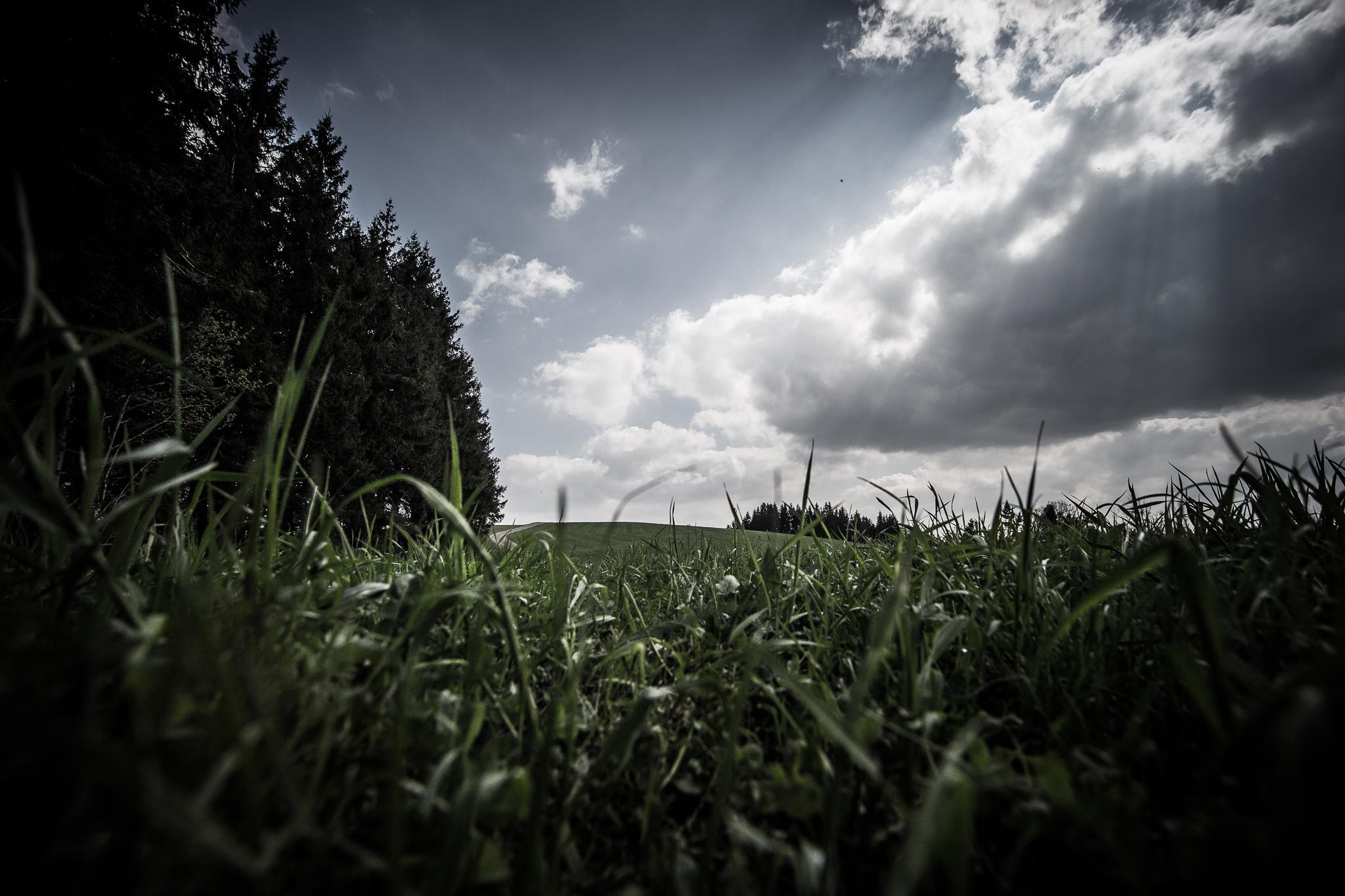 Schwarzwald Landscapes