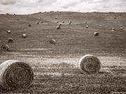 Toscany Fields