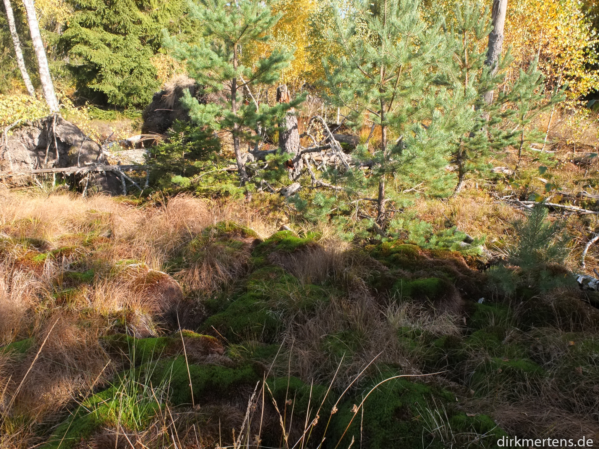 Moorlandschaft am Birkensee im Schönbuch