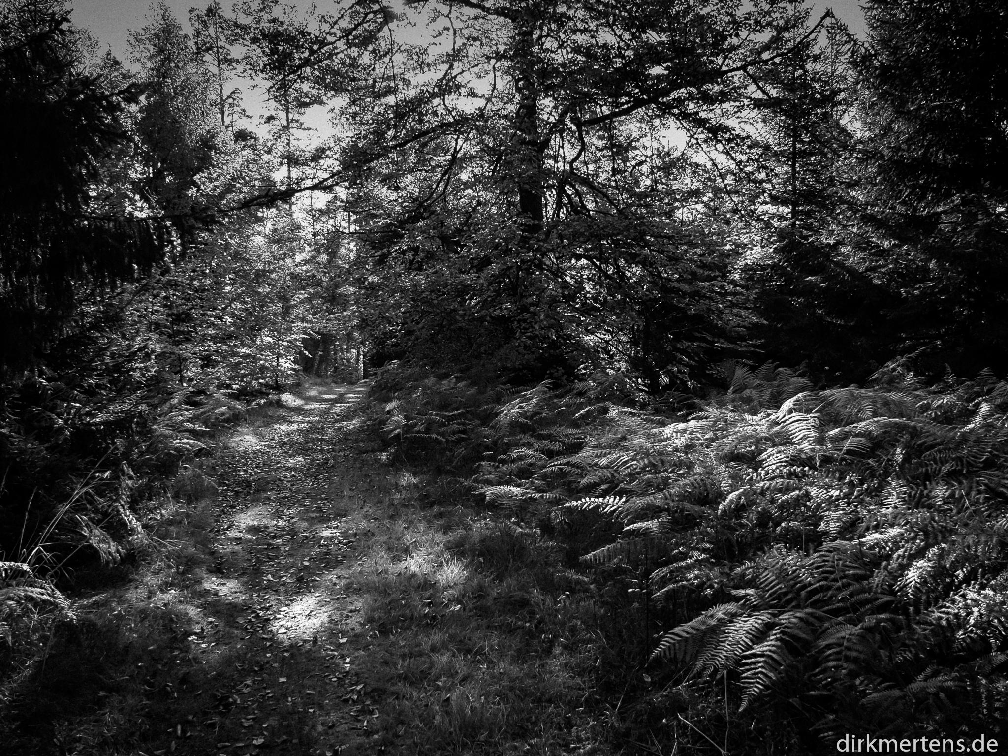 Lichtspiele im Wald