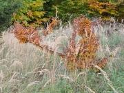 Gräser, Blätter und Bäume