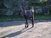 Wildpark Allensbach